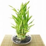 бамбук, дом, уют